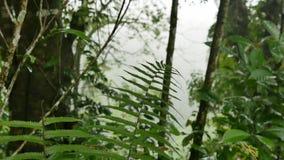 Папоротник в джунглях после дождя акции видеоматериалы