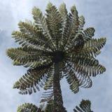 Папоротник дерева поражает со своим огромным высекаенным зонтиком стоковое изображение