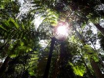 Папоротник дерева Стоковое фото RF