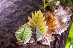 Папоротник лист дуба Стоковое фото RF