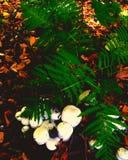 папоротник и грибок Стоковые Изображения RF