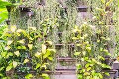 Папоротник и плющ дьявола на стене в саде Стоковые Изображения RF