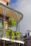 Папоротник на балконе Стоковое фото RF
