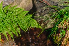 папоротник растя над потоком Стоковое Изображение