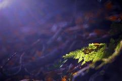 папоротник темноты предпосылки Стоковое фото RF