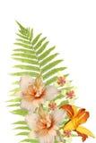 папоротник цветет листья стоковая фотография rf