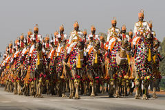 парад индейца верблюдов Стоковое Изображение