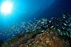 парад рыб Стоковые Фотографии RF
