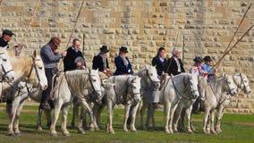 Парад manads состязания Abrivado на белых лошадях Camargue в Франции видеоматериал
