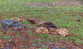 Паразитные грибы Стоковые Фотографии RF