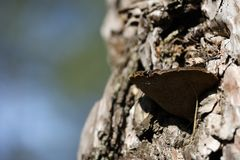 Паразит в форме грибка на стволе дерева Стоковое Изображение