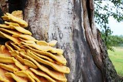 Паразит гриба на дереве Стоковая Фотография