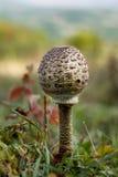 парасоль гриба стоковые фото