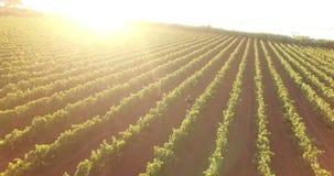 Пара бежать через виноградник сток-видео