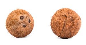 Пара гаваиских кокосов на белой предпосылке Красочные и яркие коричневые кокосы Концепция свежести и лета Стоковое фото RF