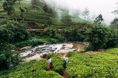 Пара идет через красивые плантации чая стоковое изображение