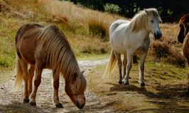Пара лошадей на луге в осени стоковое изображение rf