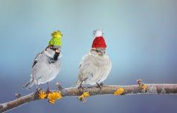 Пара милой маленькой птицы воробья сидя в дереве в Гаре Стоковые Изображения