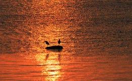 Пара птиц в заходе солнца Стоковое фото RF