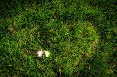 Пара следов ноги моделирует на траве 3 Стоковые Изображения