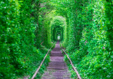Парень с тоннелем gudlyayut девушки железнодорожным леса весны влюбленности Стоковые Изображения