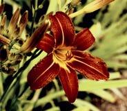 Парижские цветки Стоковые Фото