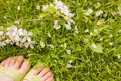 Парик с цветками яблони Стоковое Изображение