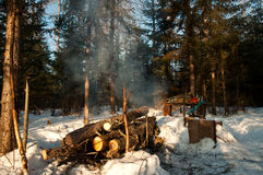 Парковать в древесинах Стоковая Фотография RF