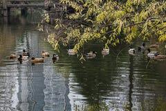 Парк акварели Китая Rugao стоковая фотография rf