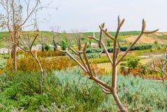 Парк Ариэль Шарона, Израиль стоковое изображение