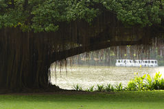 парк баньяна стоковая фотография