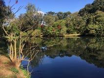 Парк Бразилия Ibirapuera Стоковая Фотография