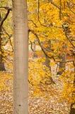 парк буков Стоковое Изображение RF