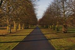 парк бульвара кустовидный Стоковая Фотография RF