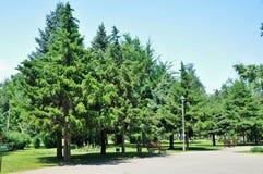 парк бульвара зеленый Стоковое Изображение RF