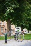 Парк велосипеда города на дереве Стоковые Изображения