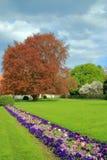 Парк весной после шторма Стоковое Фото