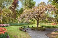 Парк весной Стоковые Фотографии RF