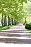 Парк весной стоковое фото