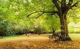 Парк весной стоковое фото rf