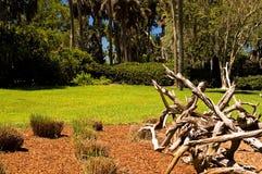 парк высушенный ветвями Стоковое Изображение RF