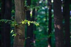 Парк в лете, деталь дерева Стоковая Фотография RF