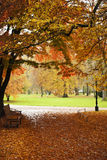 Парк в зиме Стоковая Фотография