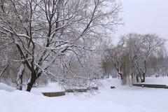 Парк в зиме Стоковые Изображения