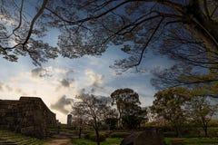 Парк в зоне замка Осака Стоковые Изображения