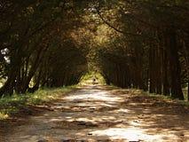 Парк в котором люди раз шли и слышали ` s детей выражает забытый и пришел к desolation Ветви сформировали естественный gal стоковое фото