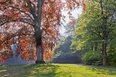Парк в лете. стоковые изображения