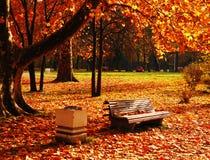 парк в ноябре стоковые фотографии rf