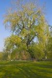 парк в ноябре стоковое фото