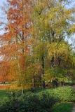 парк в ноябре Стоковое Изображение RF